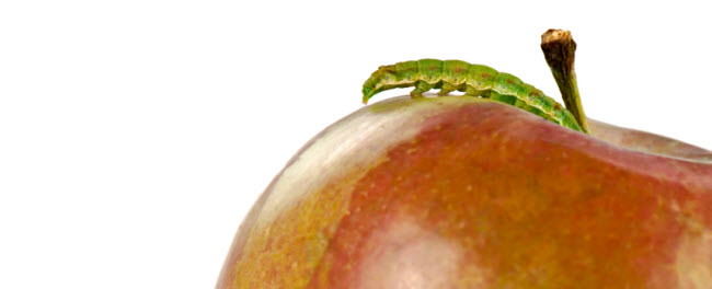 The apple and the worm