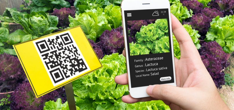The QR code comeback and the rise of mobile payments