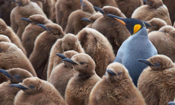 5 ways to maximise your SEO for Australian audiences
