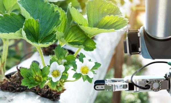 Automation in agriculture will mean more robots in our fields