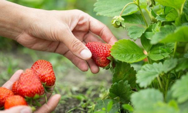 Questions that keep business owners up at night: unsustainable growth and strawberries