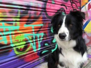 Eva the Diva Street Dog - blog